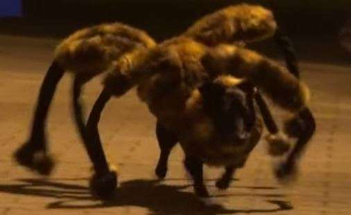 Mutant Giant Spider Dog (SA Wardega/YouTube)